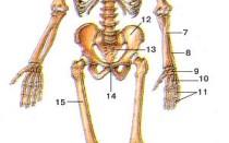 Анатомический атлас физического и энергетических тел человека. Физическое тело.