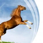Макет визитки для конно-спортивного клуба