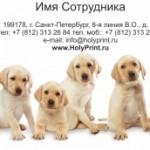 Макет визитки для заводчика собак