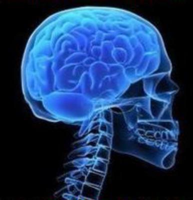 Головной мозг - это центральный орган нервной системы человека