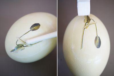 dekupaj-pasha-5