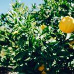 5 полезных свойств лимона и лайма