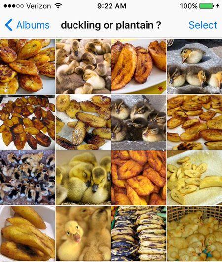 Мем: Животные или еда