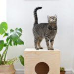Как сделать стильный домик для кота своими руками