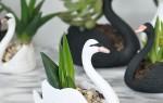 Как сделать красивый и необычный горшок для суккулентов своими руками в форме лебедя