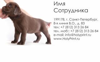 Макет визитки для зоомагазина