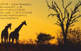 Макет визитки для организаций предлагающих туры по всему миру