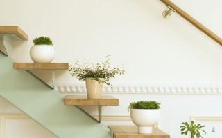 Комнатные растения для лентяев