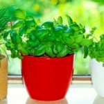 8 трав и пряностей, которые легко вырастить на кухне самостоятельно