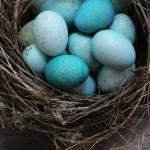Как покрасить яйца с помощью красной капусты и золотой краски